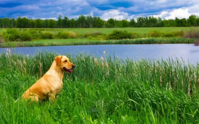 Can my dog really get heartworm in Oregon?